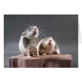 2 cute rats note card