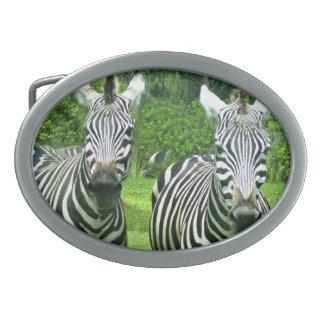 2 Cute Zebras Belt Buckle