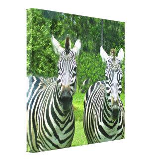 2 Cute Zebras Canvas Print