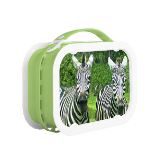 2 Cute Zebras Lunch Box