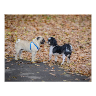 2 dogs 21.5 cm x 28 cm flyer