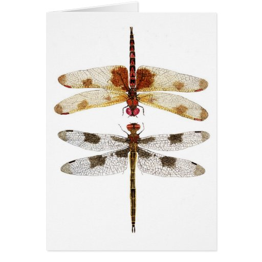 2 Dragonflies looking at each other Greeting Card