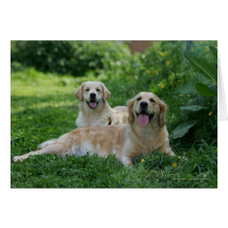 2 Golden Retrievers Laying in Grass Card