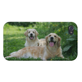 2 Golden Retrievers Laying in Grass iPhone 4 Case
