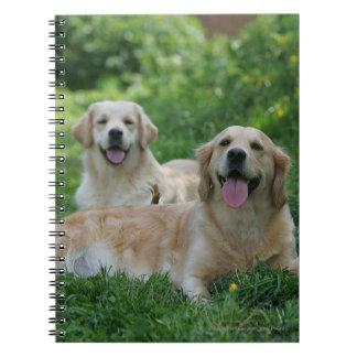 2 Golden Retrievers Laying in Grass Notebook
