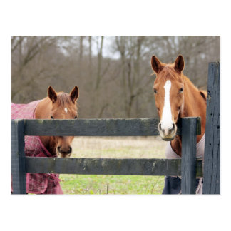 2 Horses With Blankets At The Fence Post Card