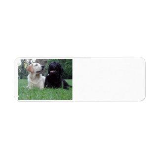 2 labs.png return address label