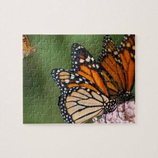 2 monarchs on milkweed photo puzzle