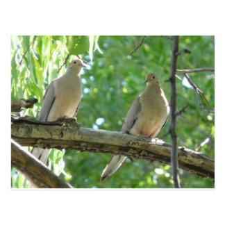 2 morning doves postcard