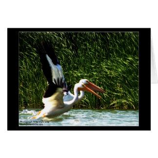 2 Pelicans Note Card