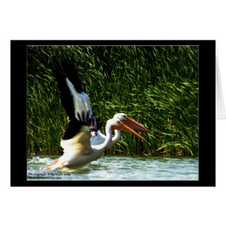 2 Pelicans Stationery Note Card
