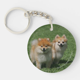 2 Pomeranians Looking at Camera Key Ring