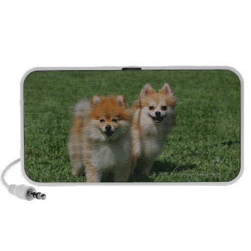 2 Pomeranians Looking at Camera Speaker System