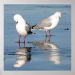 2 Seagulls on a Beach Poster
