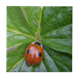 2-spot ladybug 3 tile
