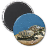 2 turtles  on a rock magnets