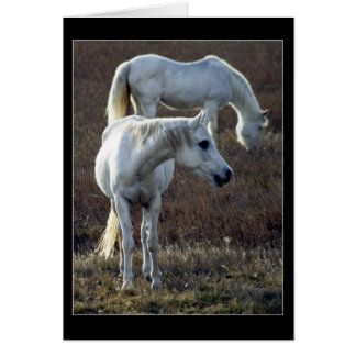 2 White Horses Note Card