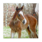 2CUTE HORSE FOAL BABY PONY TILE