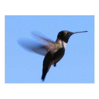 2J2 Hummingbird in Flight in a Blue Sky Post Cards