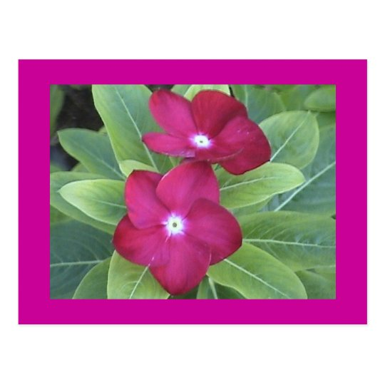 2nd Flower Postcard