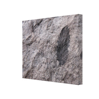 350 Million Yr. Old Plant Fossil Photo Print Gallery Wrapped Canvas