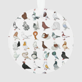 36 Pigeon Breeds Ornament