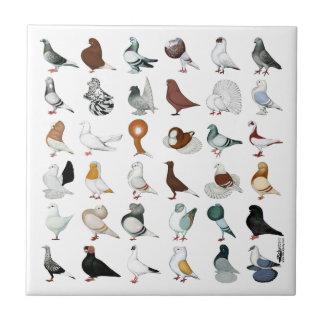 36 Pigeon Breeds Small Square Tile