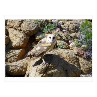 3 Barn Owls Scaling Boulders Postcard