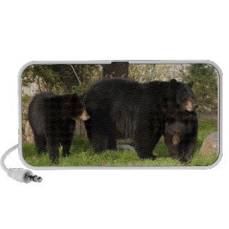 3 Black Bears Speaker System