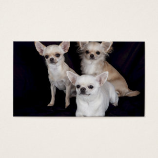 3 chihuahuas business card