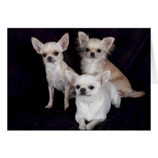 3 chihuahuas card