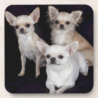 3 chihuahuas coasters