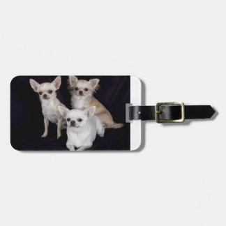 3 chihuahuas.png luggage tag