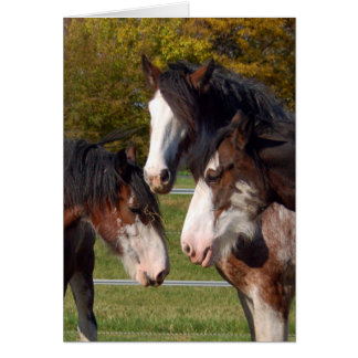 3 Clydesdale heads Greeting Card