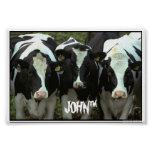3 cow print