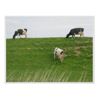 3 Cows grazing Poster