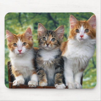 3-cute-kittens-with-nature-backgrounds_jpg mouse mat