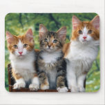 3-cute-kittens-with-nature-backgrounds_jpg mouse pad