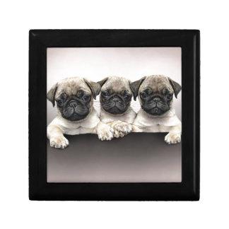 3 Cute Pug Pippies Small Square Gift Box