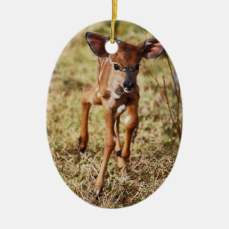 3 day old baby Nyala deer Christmas Ornament