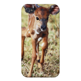 3 day old baby Nyala deer iPhone 4/4S Covers