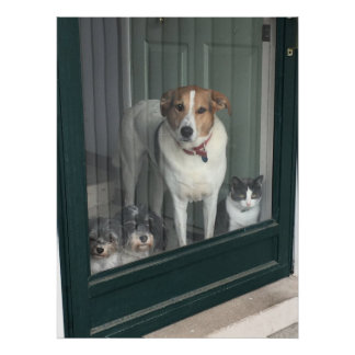 3 Dogs and a Cat Poster