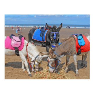 3 Donkeys Postcard