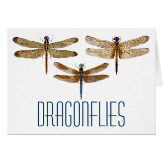 3 Dragonflies Card