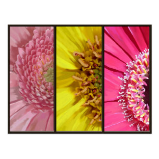 3 Gerberas Collage Postcard
