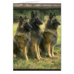 3-German Shepherds Greeting Card