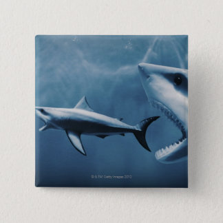 3 Great white sharks (Carcharodon carcharias) 15 Cm Square Badge