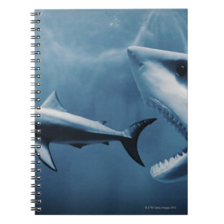 3 Great white sharks (Carcharodon carcharias) Notebook