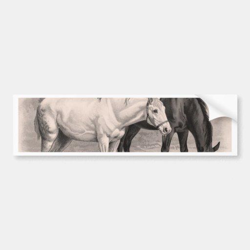3 Horses, B&W Bumper Sticker