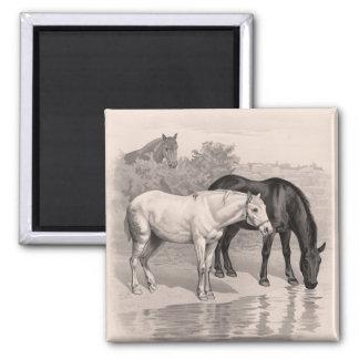 3 horses B&W Refrigerator Magnet